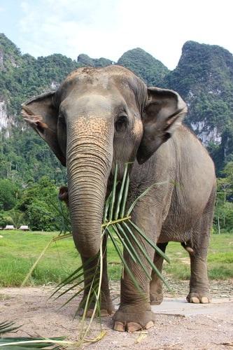 Elephant Hills | Thailand -