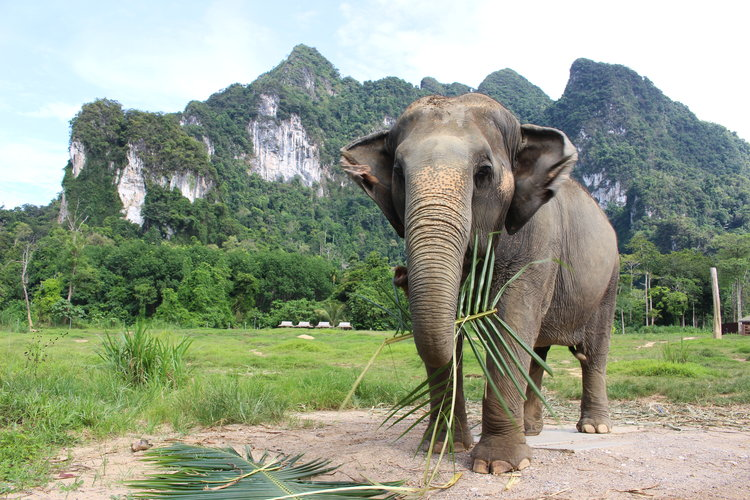 Elephant Hills - Luxury Tented Camp & Adventure Tours | Khao Sok National Park, Thailand