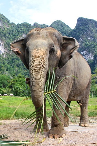 Elephant Hills Thailand | Adventure Tours - Epic Adventure Tours and the Ultimate Elephant Experience