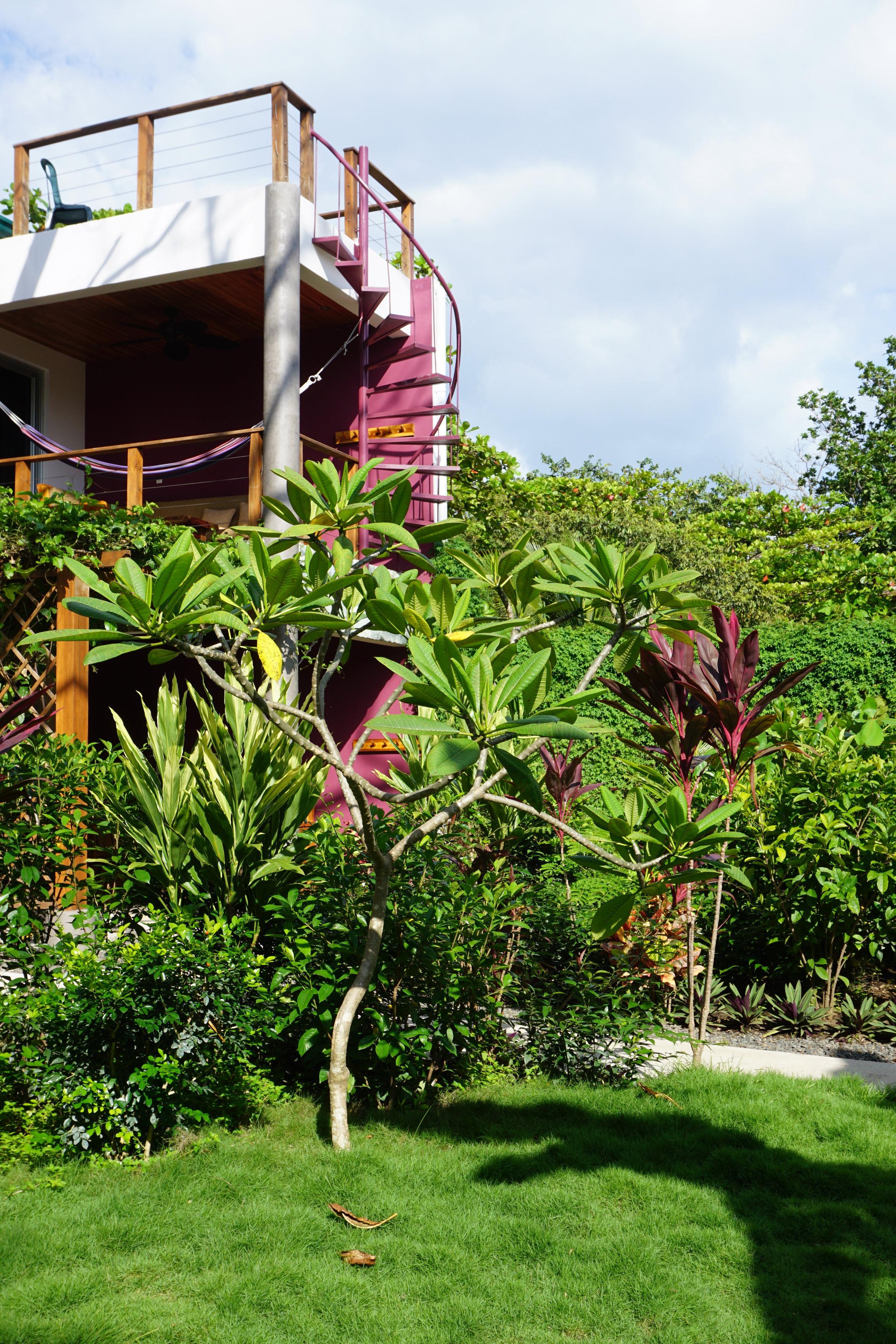 Iluminar Yoga Hotel | Nosara, Costa Rica - Coming Soon
