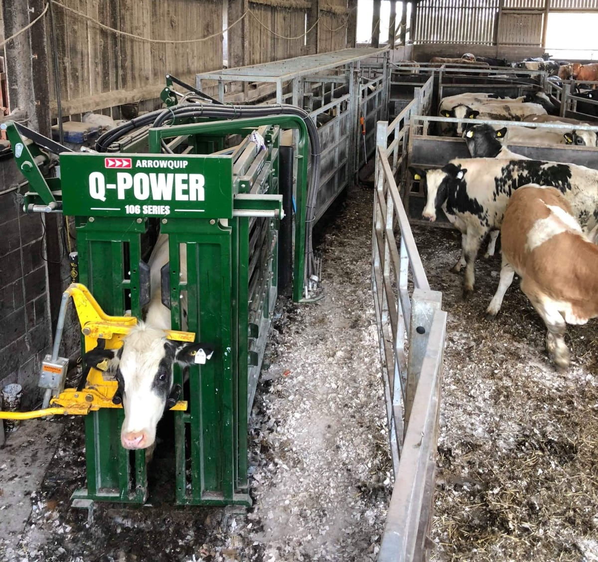 The Q-Power 106 Series Hydraulic Cattle Crush reduces stress to cattle handlers and their livestock.