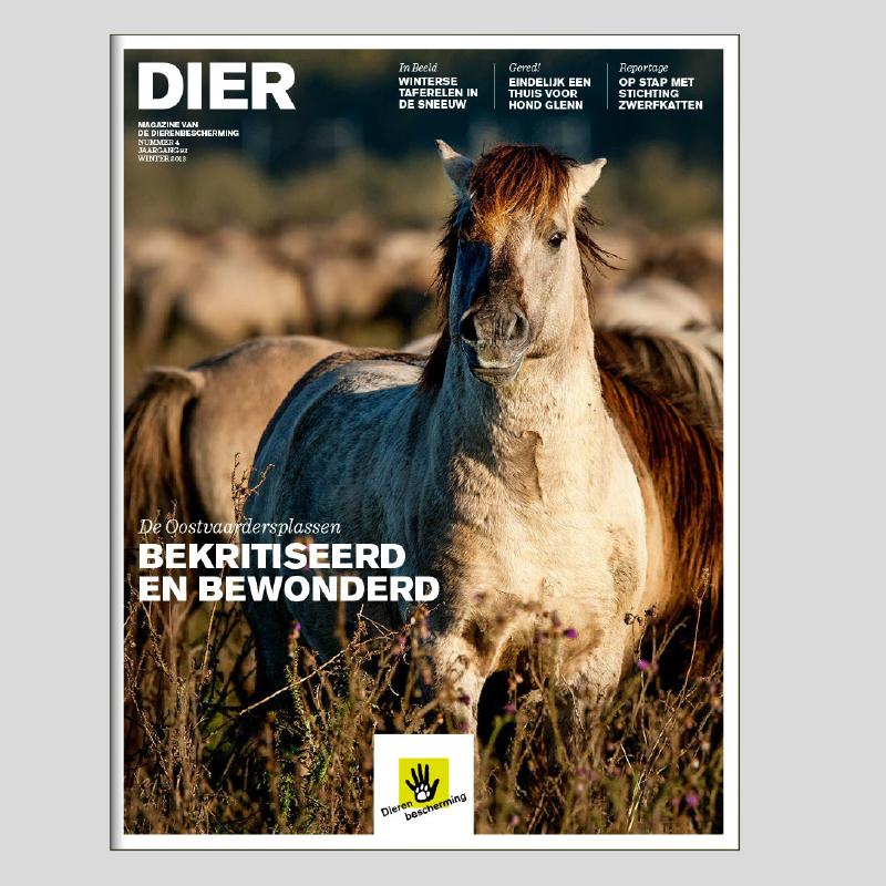 dierenbescherming_eigentijdse_huistijl_4.jpg