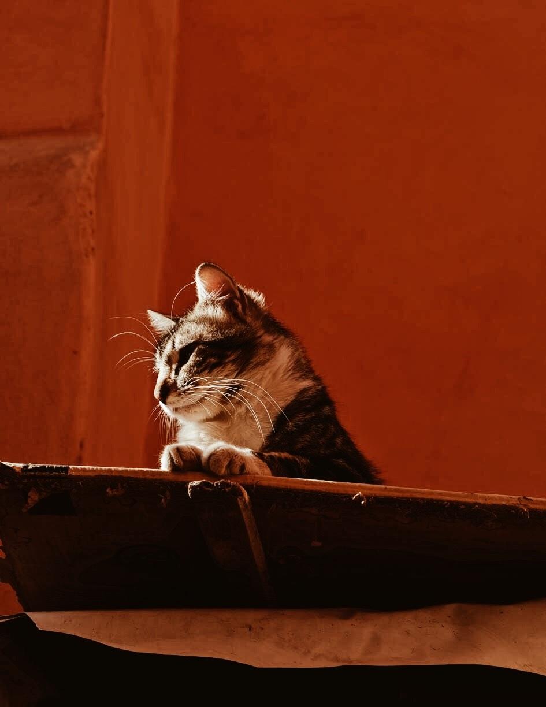 Carnet+Sauvage+-+Blog+voyage+Marrakech%2C+visiter+la+medina