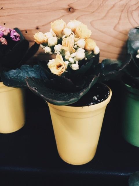 mother day flower.jpg