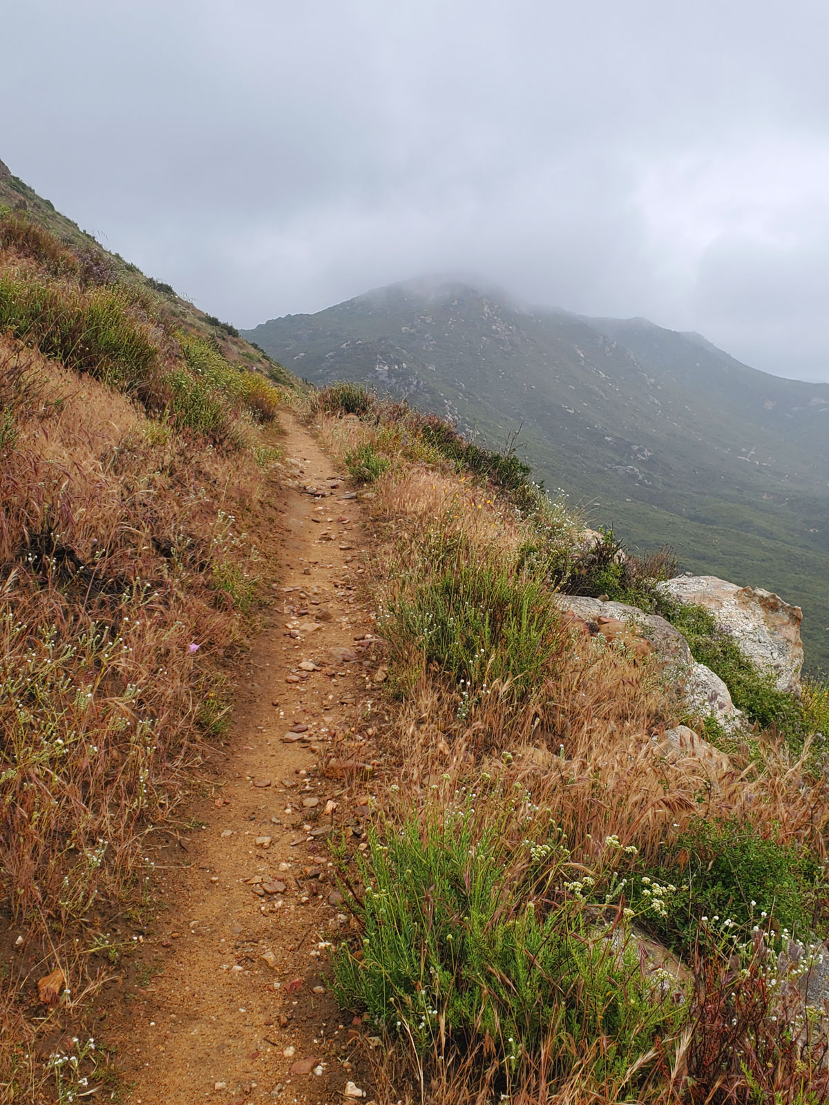 Pacific-Crest-Trail-Foggy-Trail.jpg