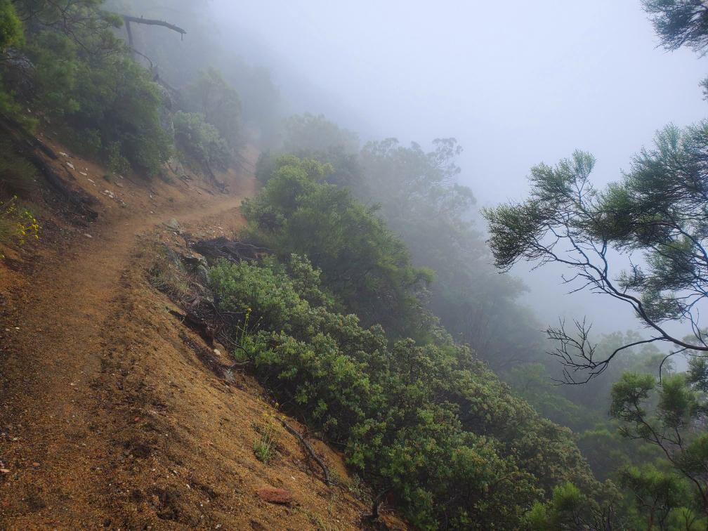 Pacific-Crest-Trail-Foggy.jpg
