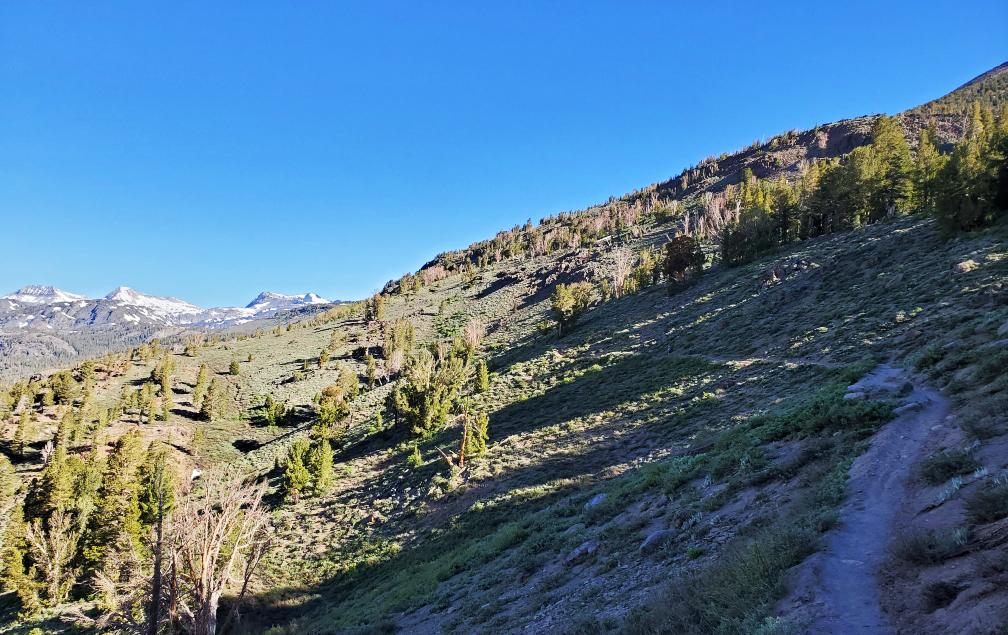 PCT-Day-45-Trail.jpg