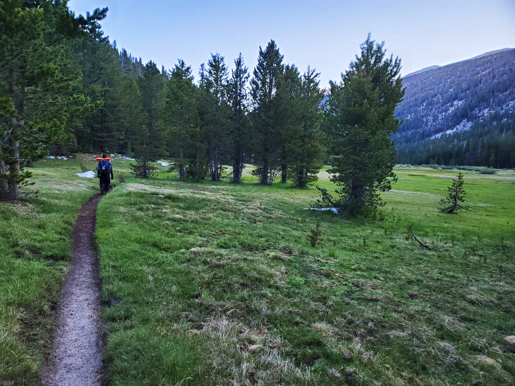 PCT-Day-45-Hiking-through-the-meadow.jpg