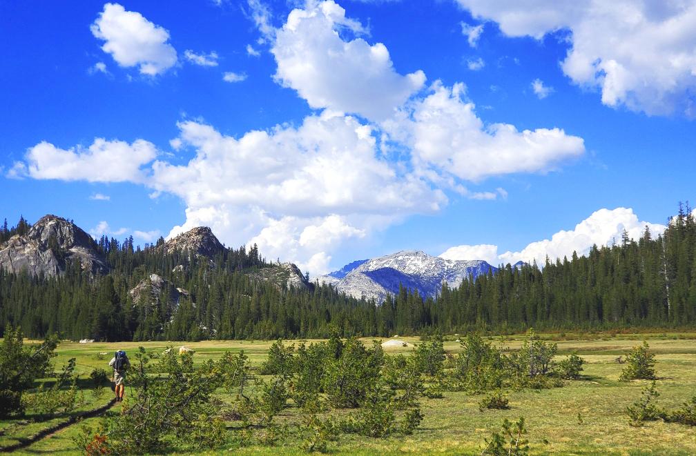 PCT-Day-45-Meadow-Hiking.jpg