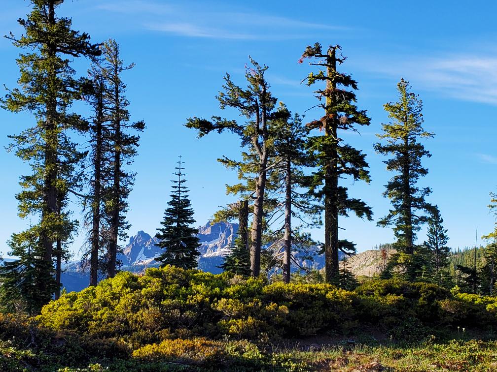 PCT-Day-57-Mountains-through-trees.jpg