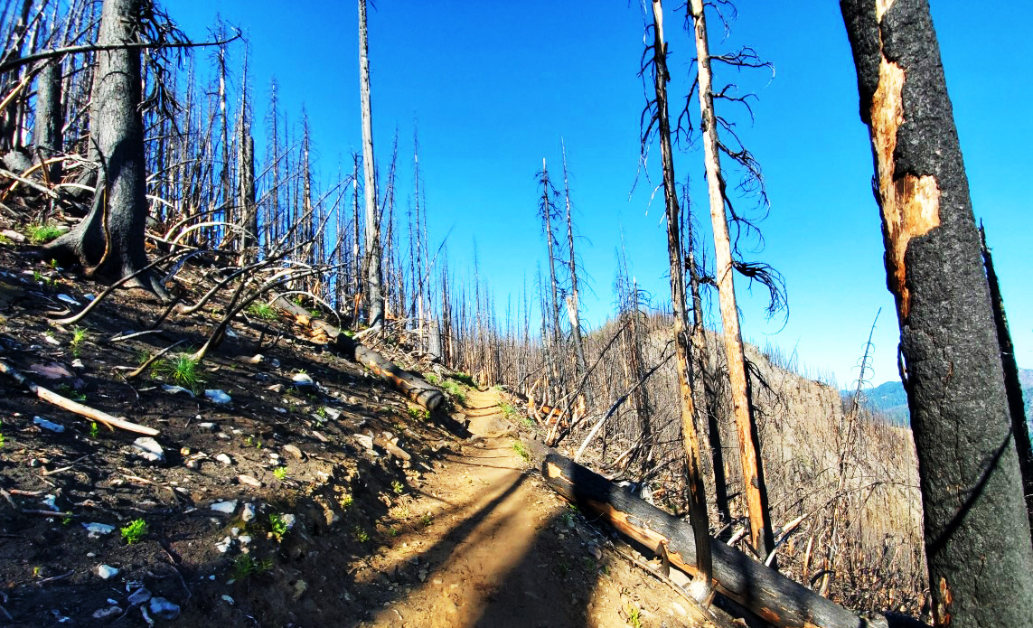 pct-day-75-forest-fire.jpg