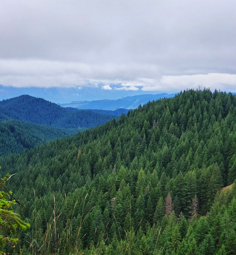 pct-day-80-forest.jpg