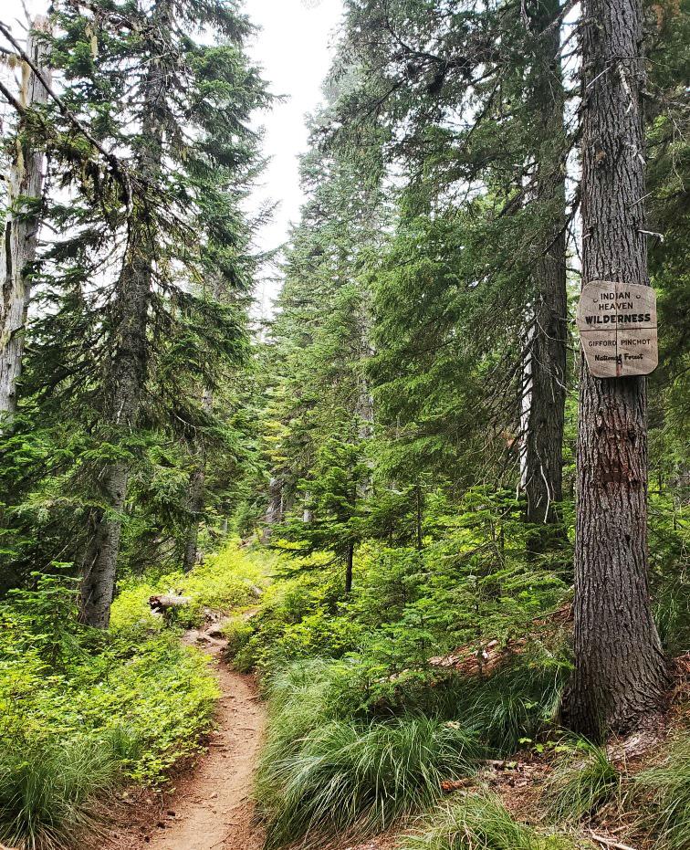 pct-day-80-wilderness.jpg