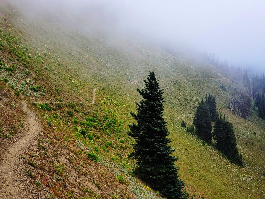 pct-day-84-foggy-trail.jpg