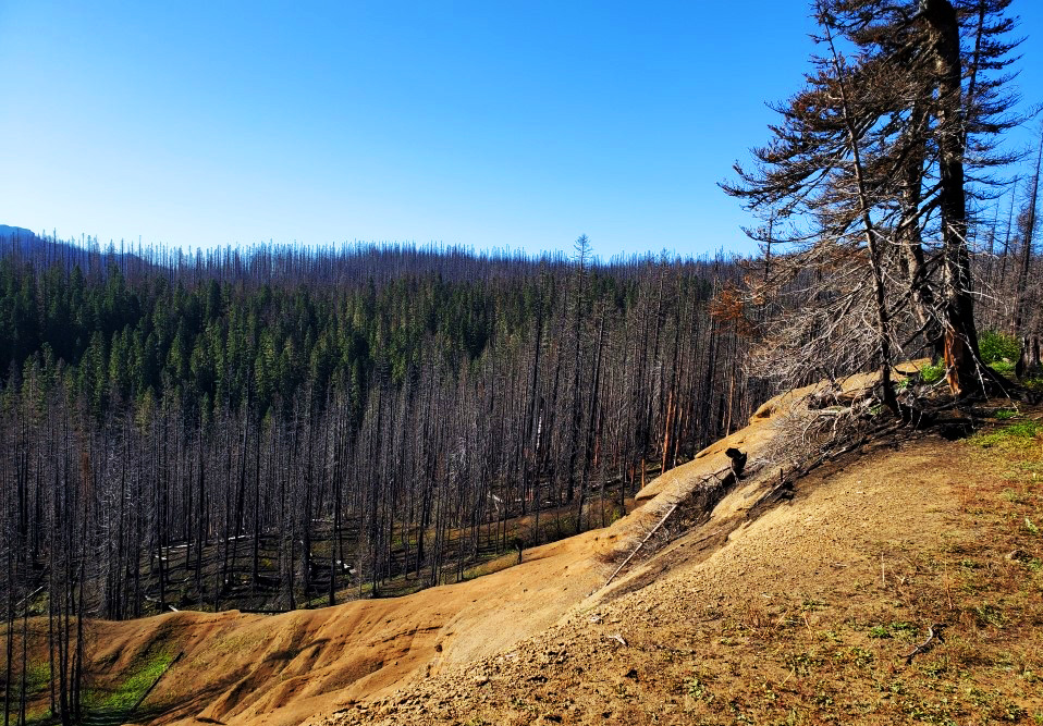 pct-day-85-burned-forest.jpg