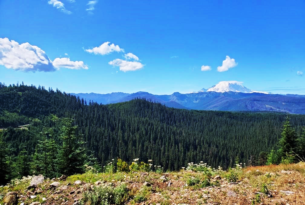 pct-day-85-mountain-view.jpg