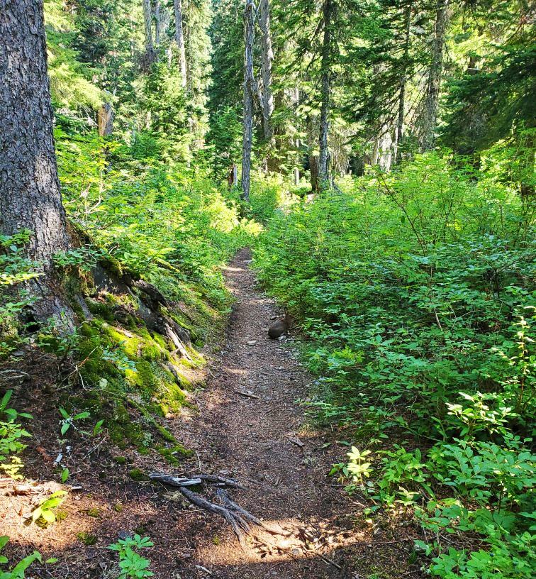 pct-day-87-trail.jpg