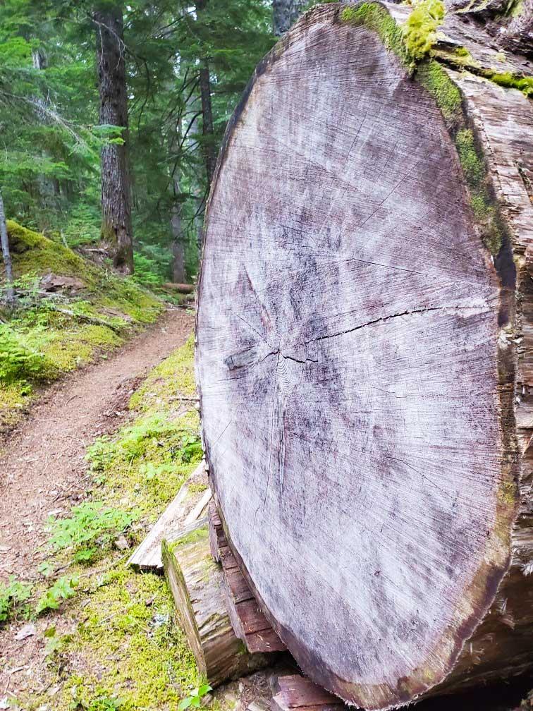 pct-day-92-giant-log.jpg