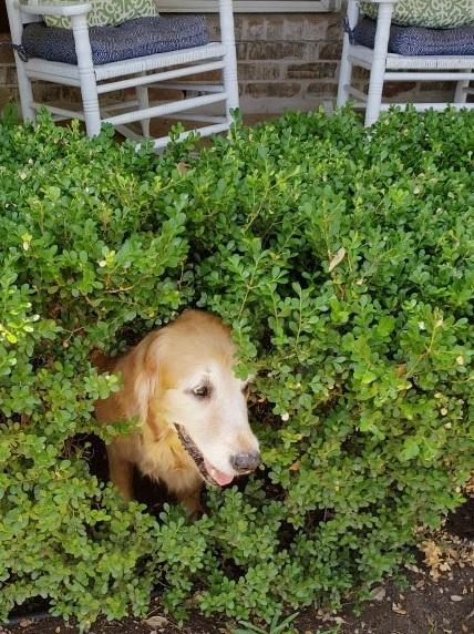 sunny-bush.jpg