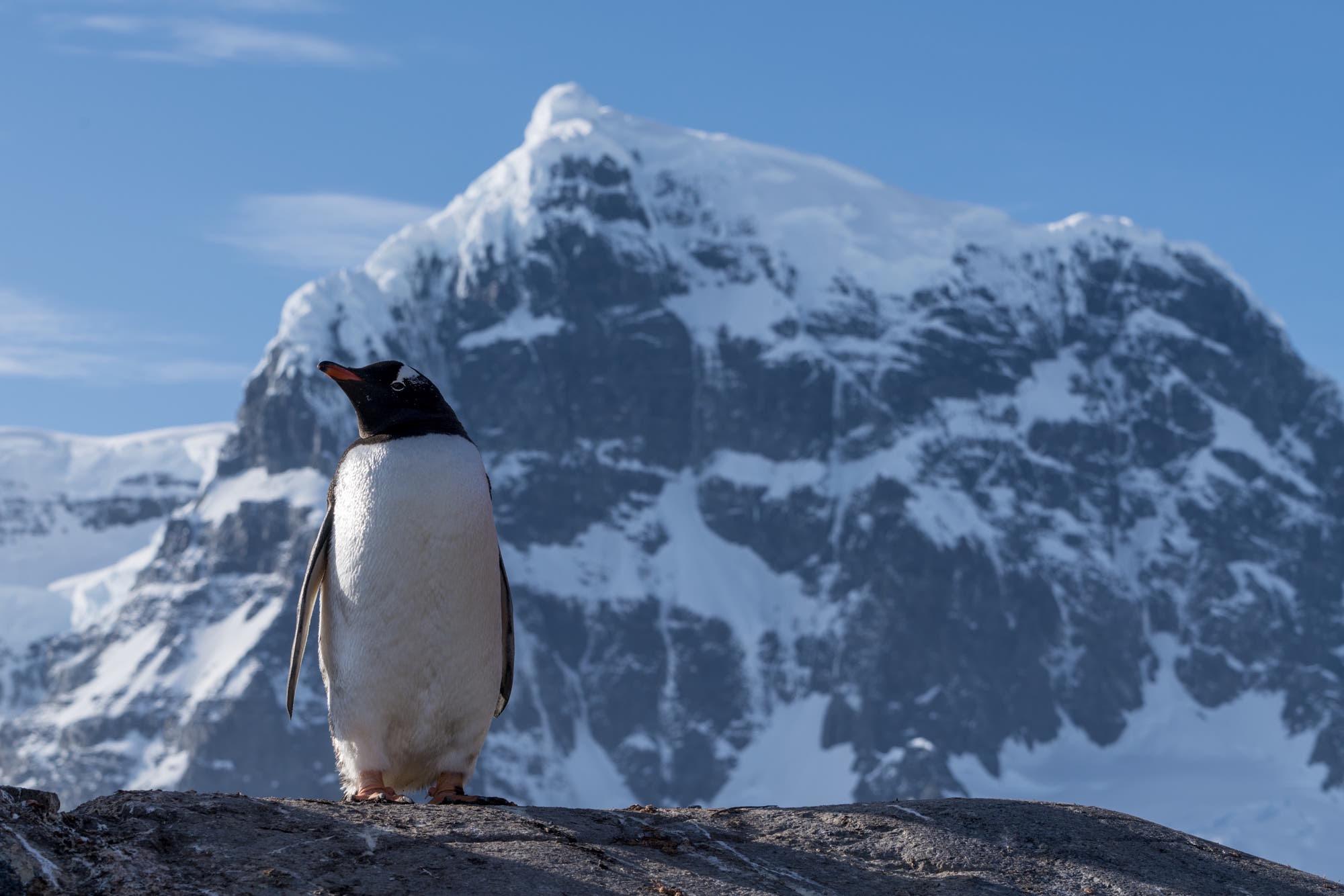 An Antarctic Moment
