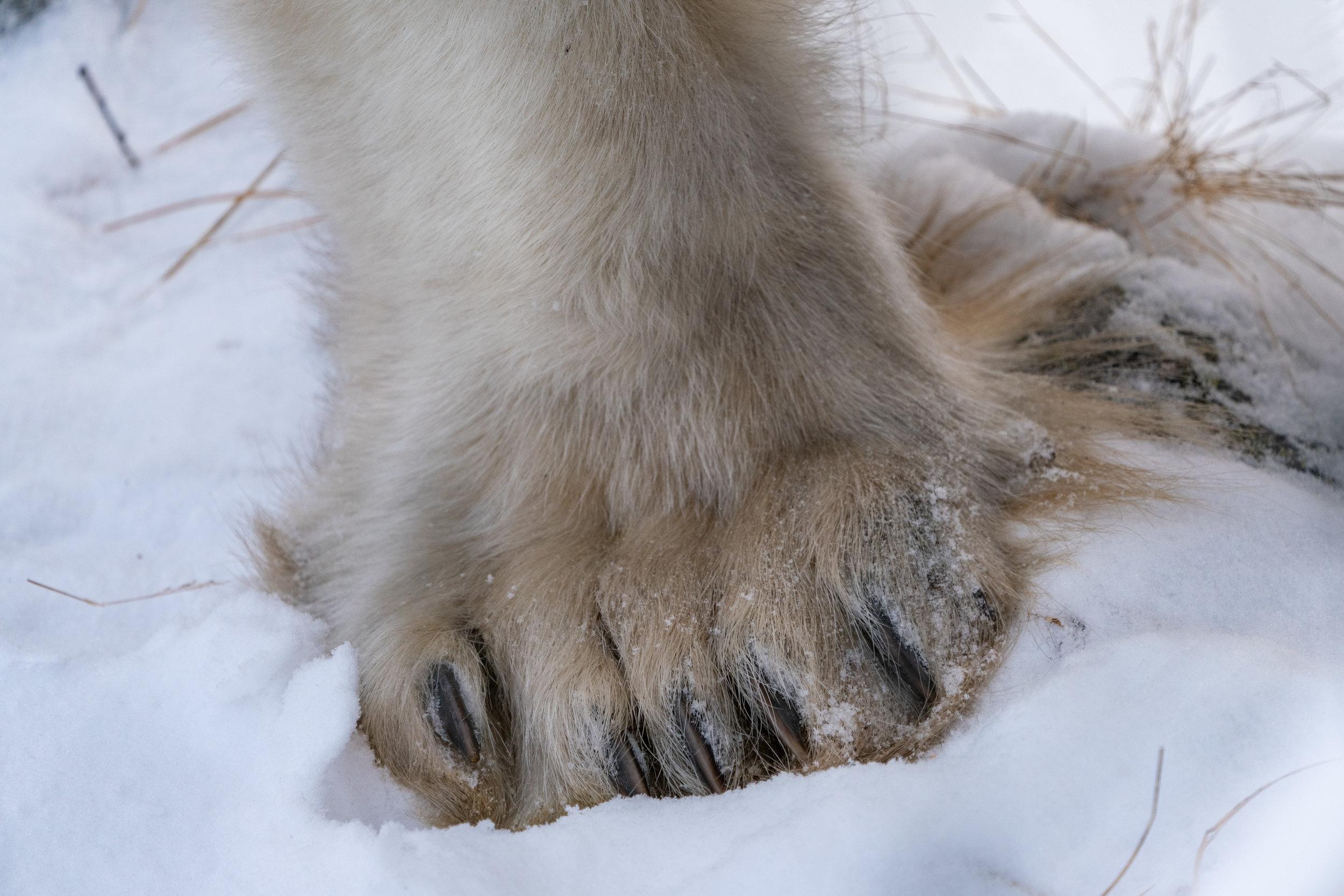Pete: Old Feet