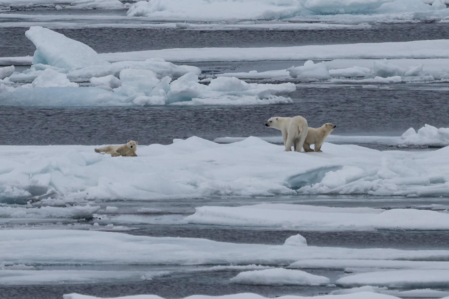 Polar Bear Spa