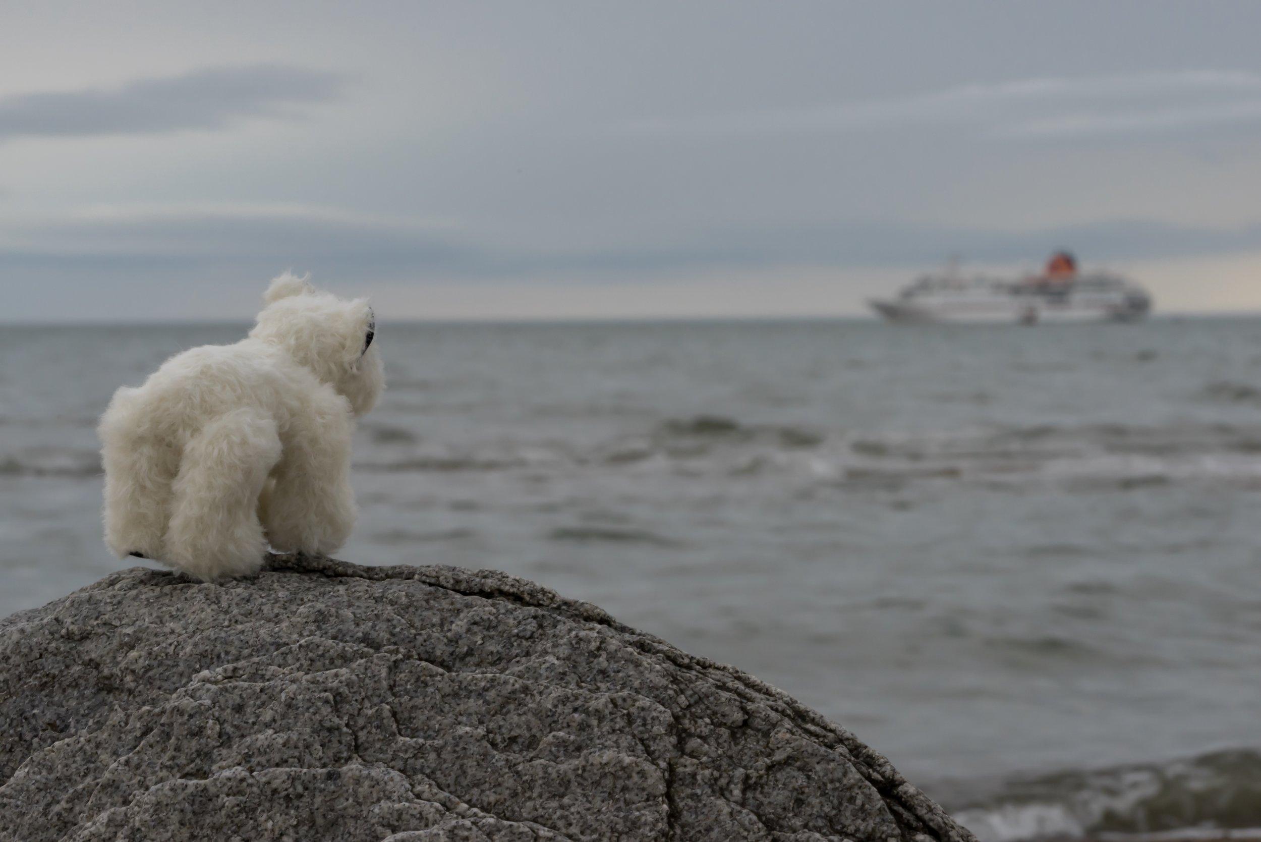 71°13'N   178°54'E ● Wrangel Island   Russia