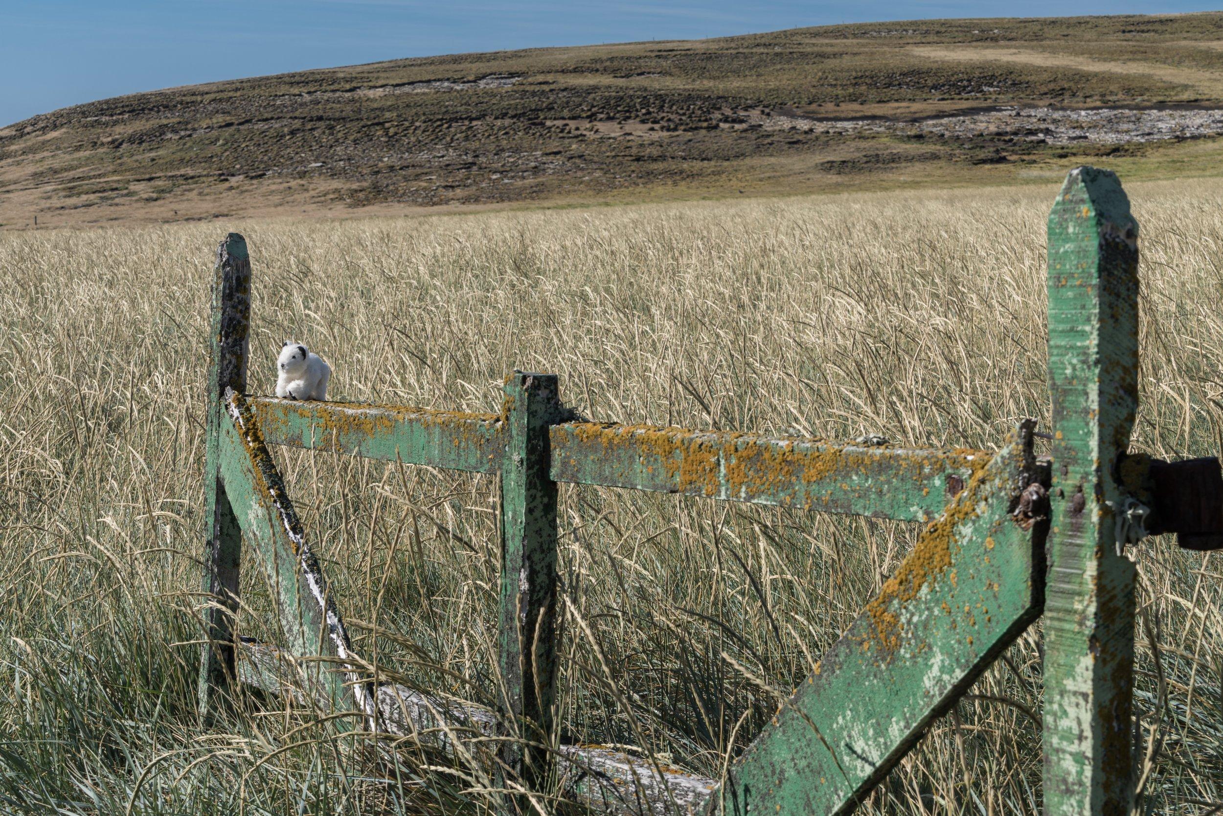 51°32'S   60°57'W ● Carcass Island   Falkland Islands