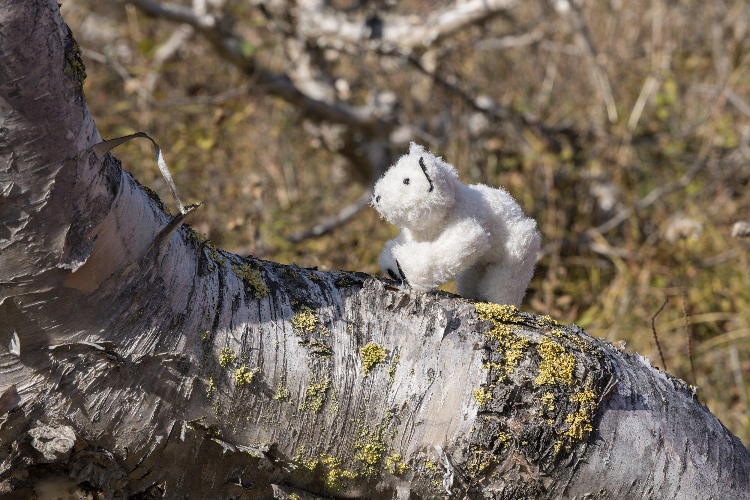 53°2'N   158°38'E ● Nalychevo Nature Park   Russia
