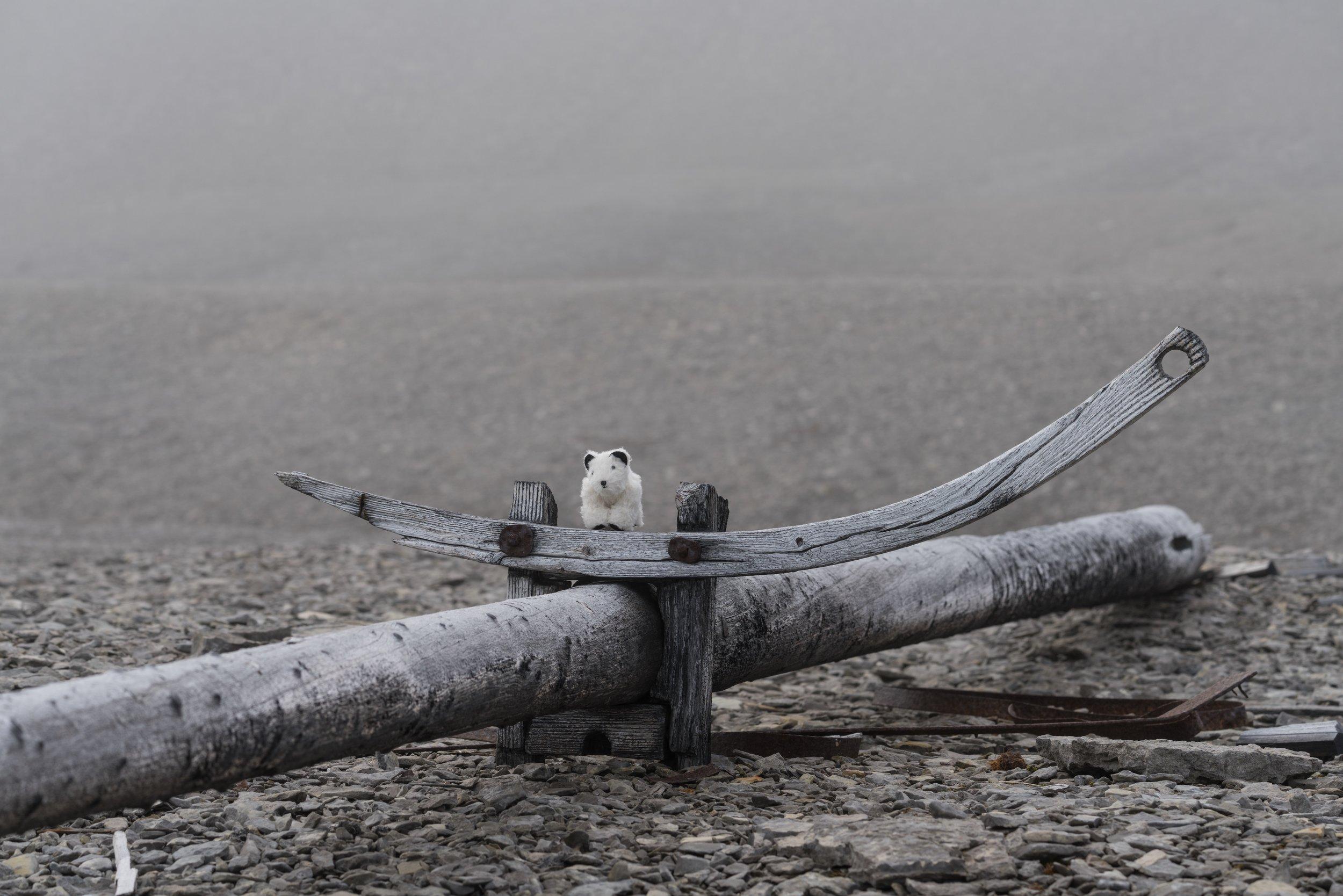 74°33'N   90°46'W ● Beechey Island   Canada