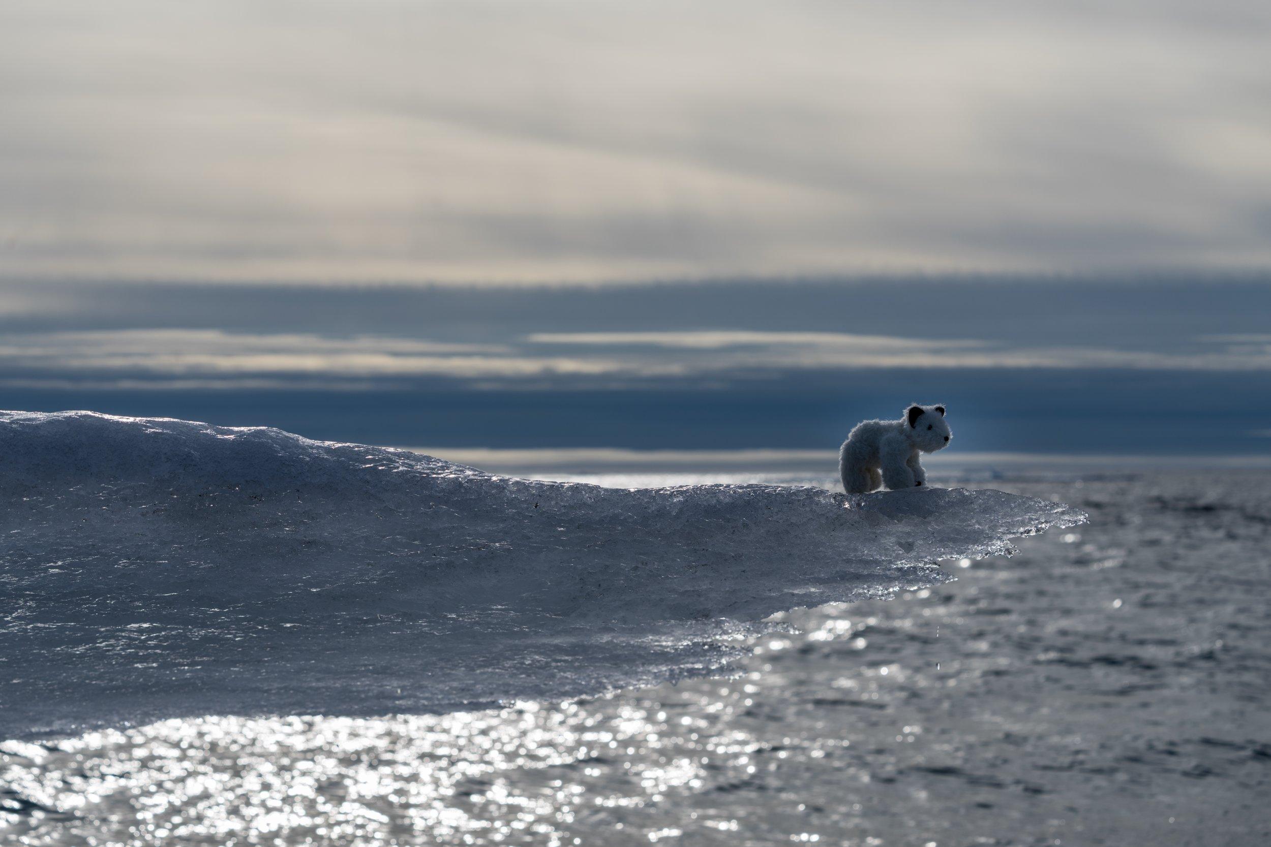 72°42'N   91°58'W ● Somerset Island   Canada