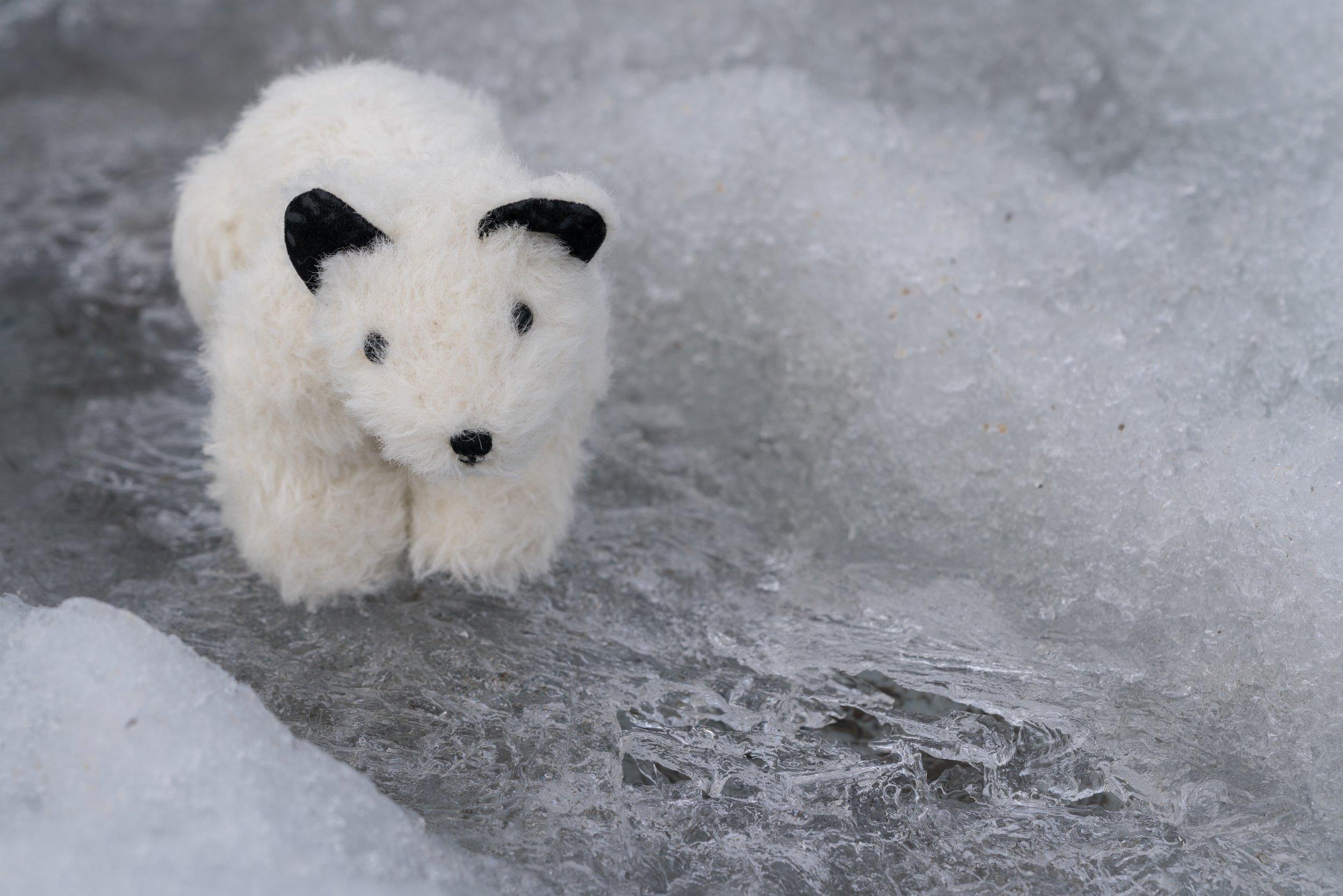 71°44'N   74°41'W ● Icy Arm   Baffin Island   Canada