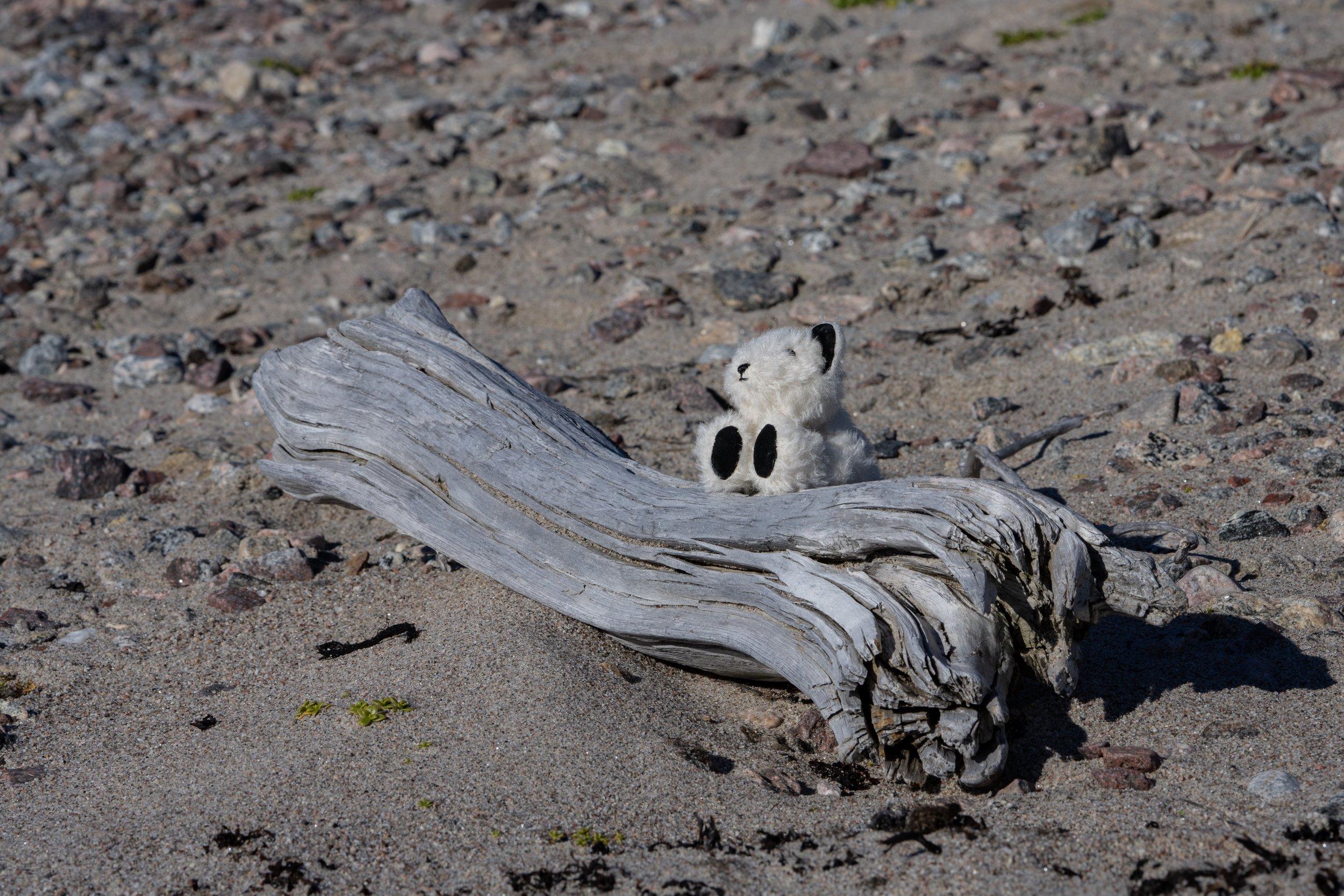 71°31'N   73°32'W ● Paterson Inlet   Baffin Island   Canada
