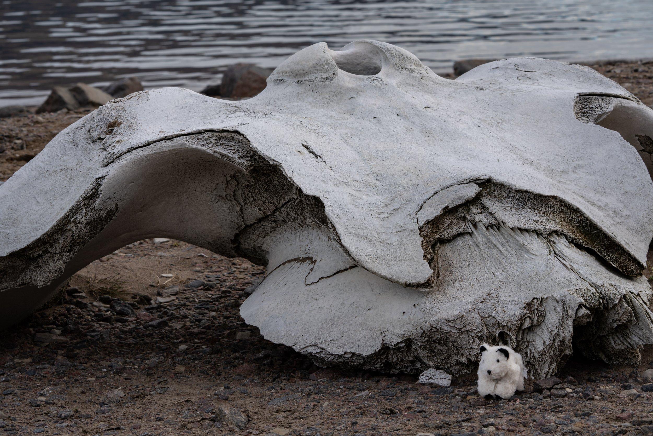 76°25'N   80°51'W ● Fram Fjord   Canada