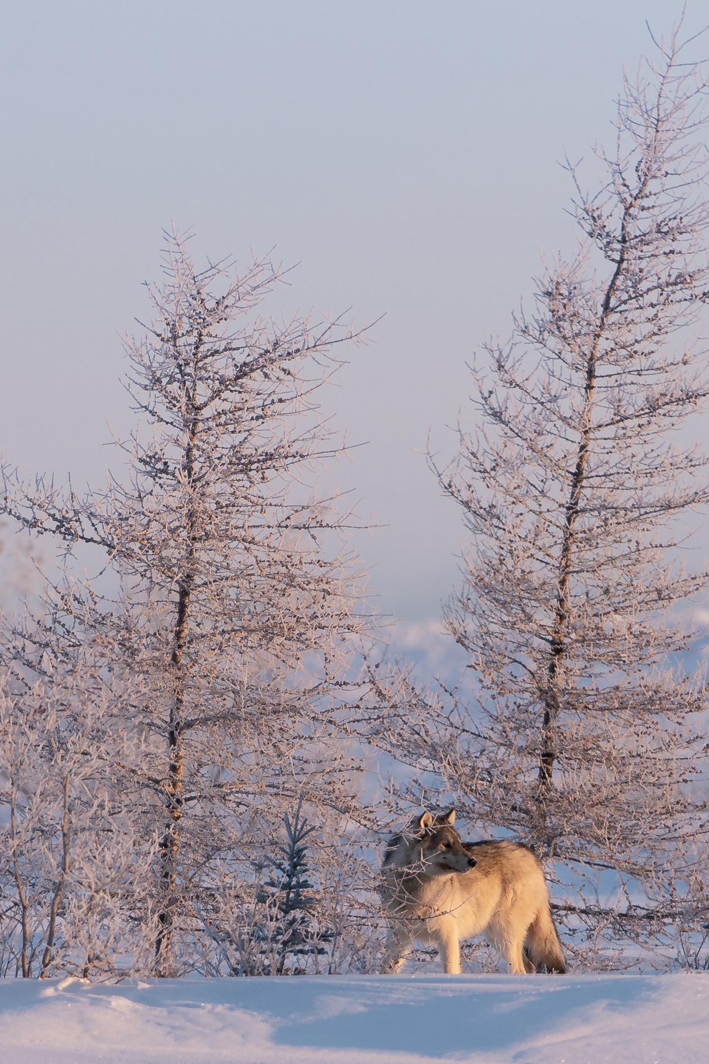 Wonderful Arctic