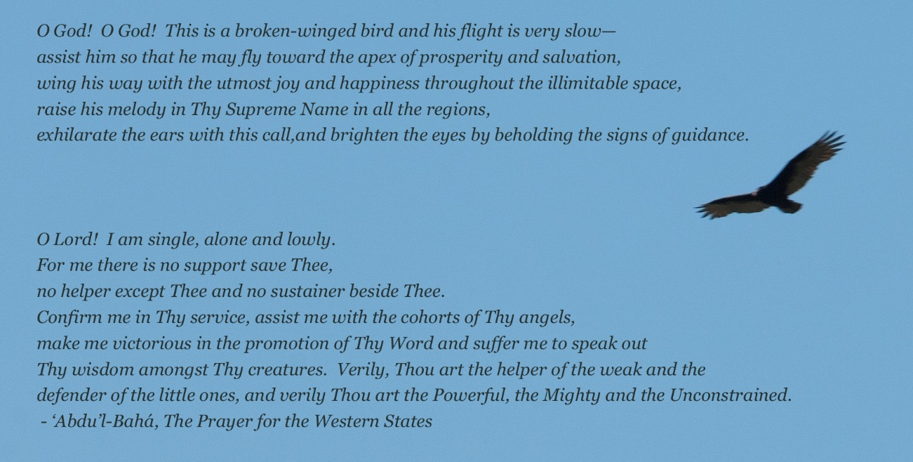Red-Tail-Hawk_Base-Text_PrayerWS04.jpg