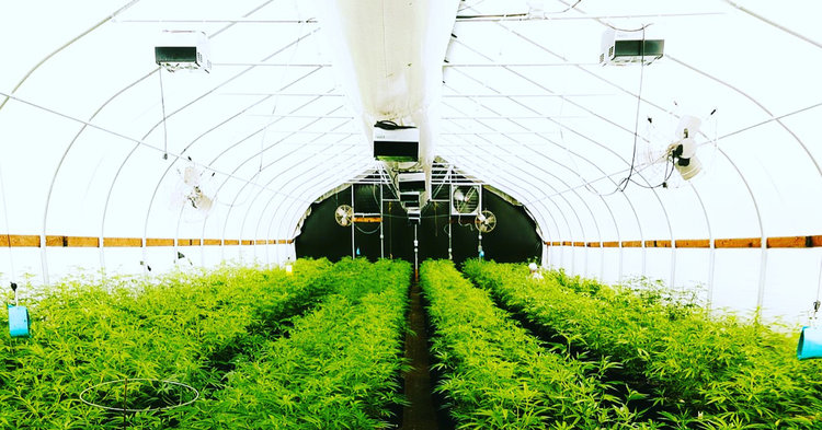 space-weed-cannagenesis-farms.JPG