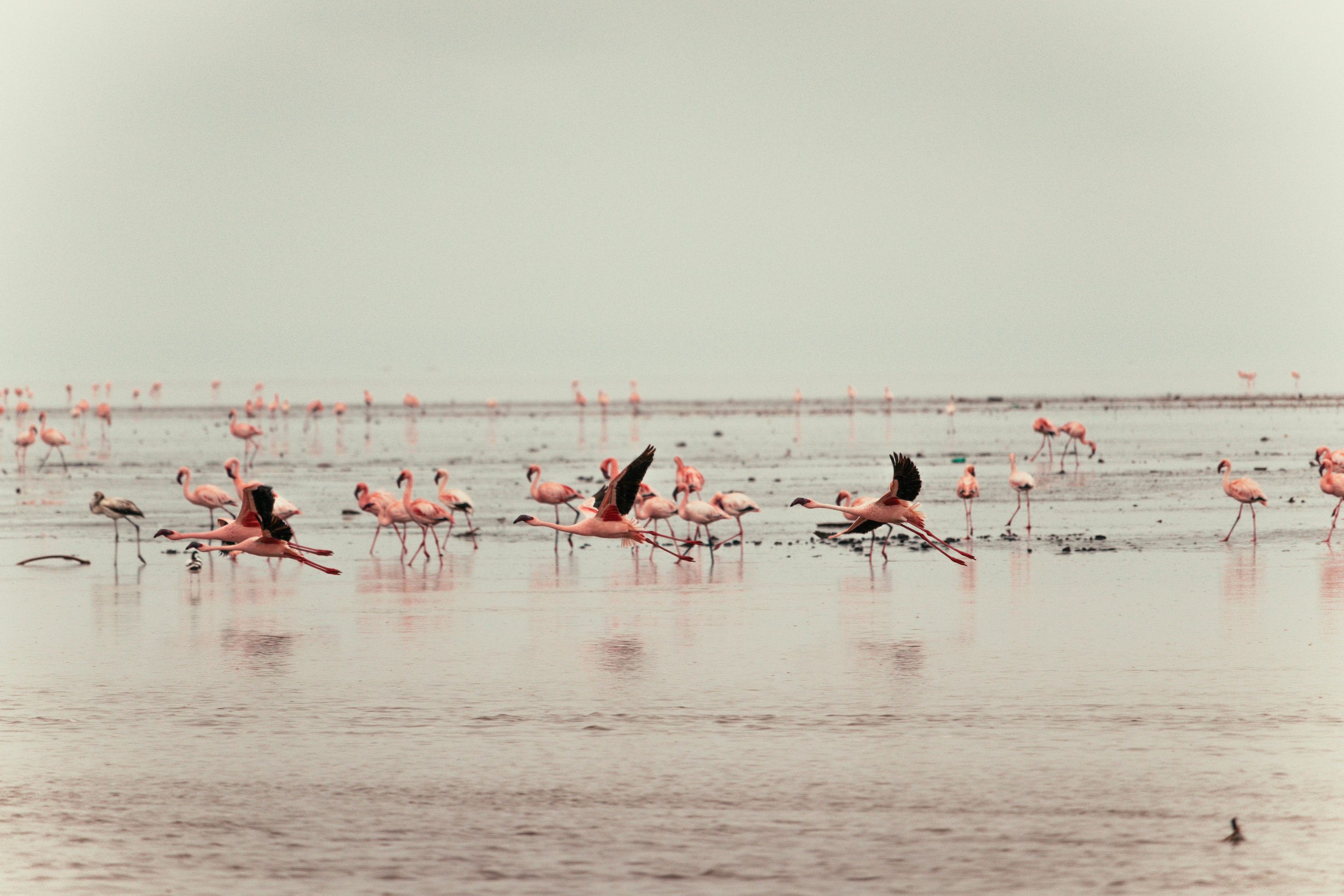 Lake Natron -
