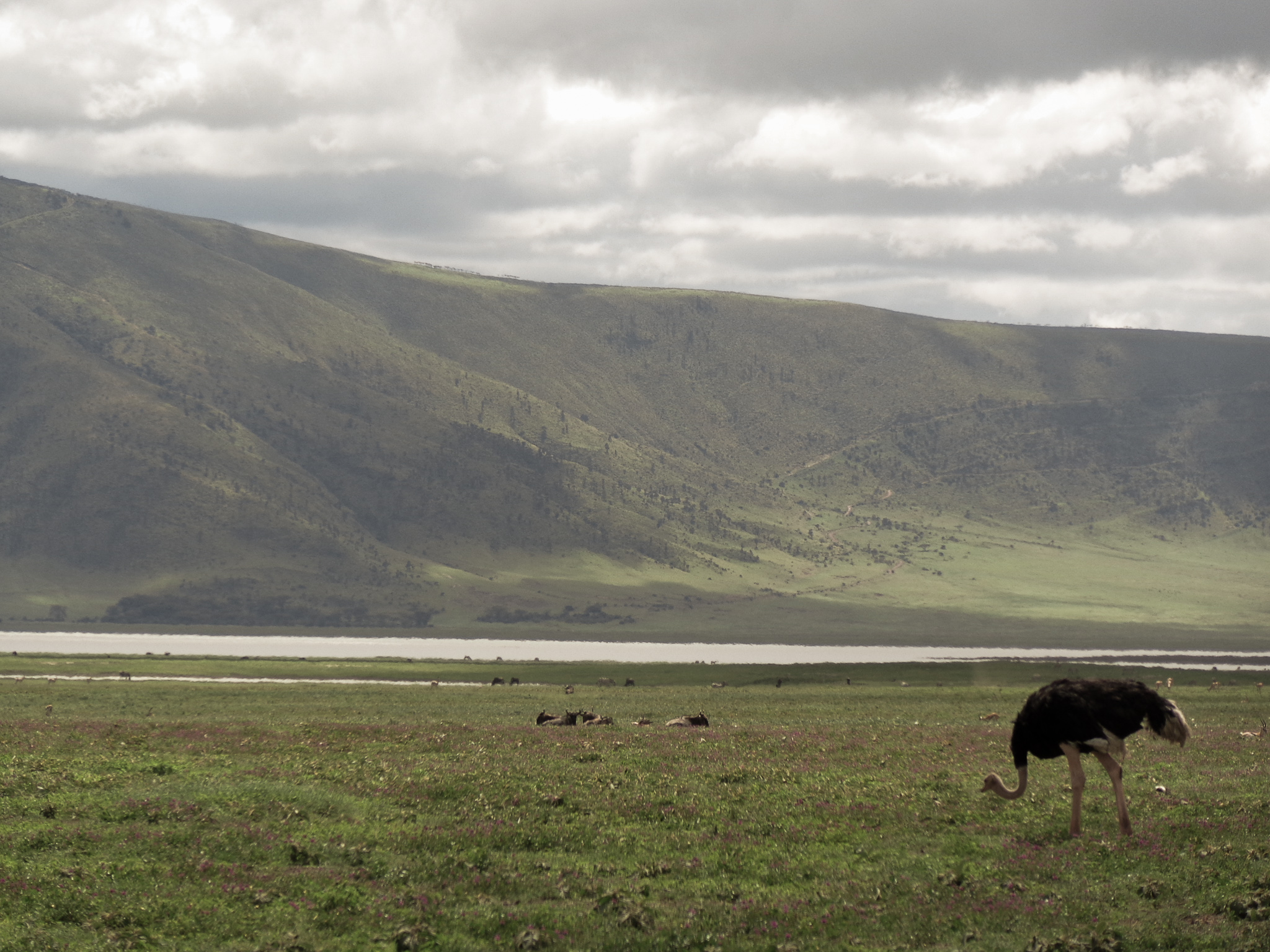 Ngorongoro Conservation Area -