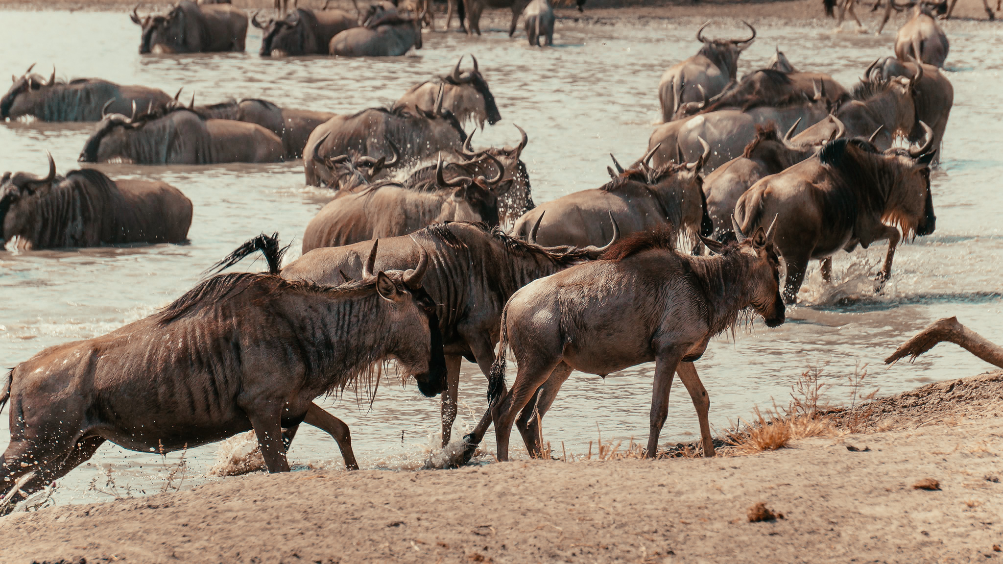 Serengeti National Park -