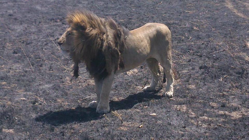 safari_55.jpg
