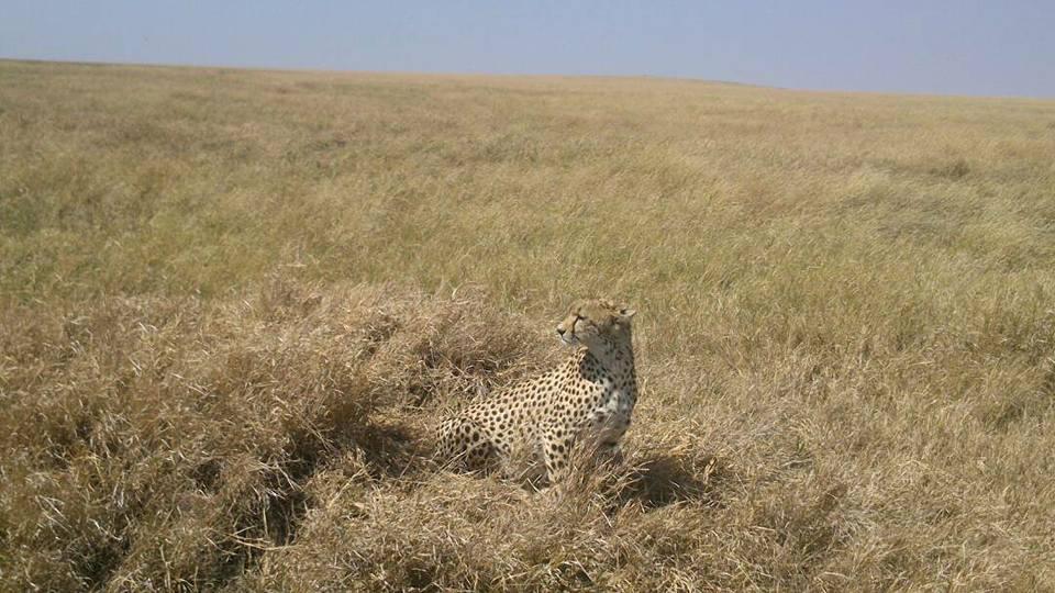 safari_401.jpg