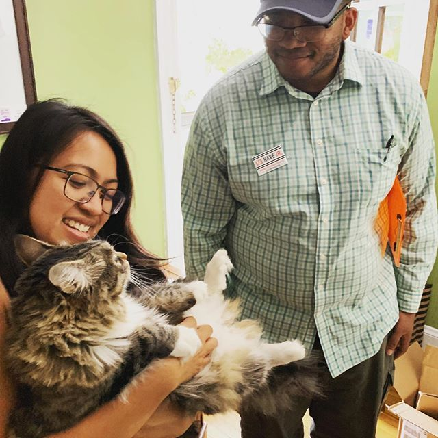District 9 cats for Lee! Today I met Sisko the kitty. Sisko's parents are two district residents on Bennet street. I heard about what they love about being in Brighton but also their ideas for more intergenerational, cultural spaces to build a sense of unity and honoring the diversity of #D9. #bospoli #catsofinstagram #cats4lee