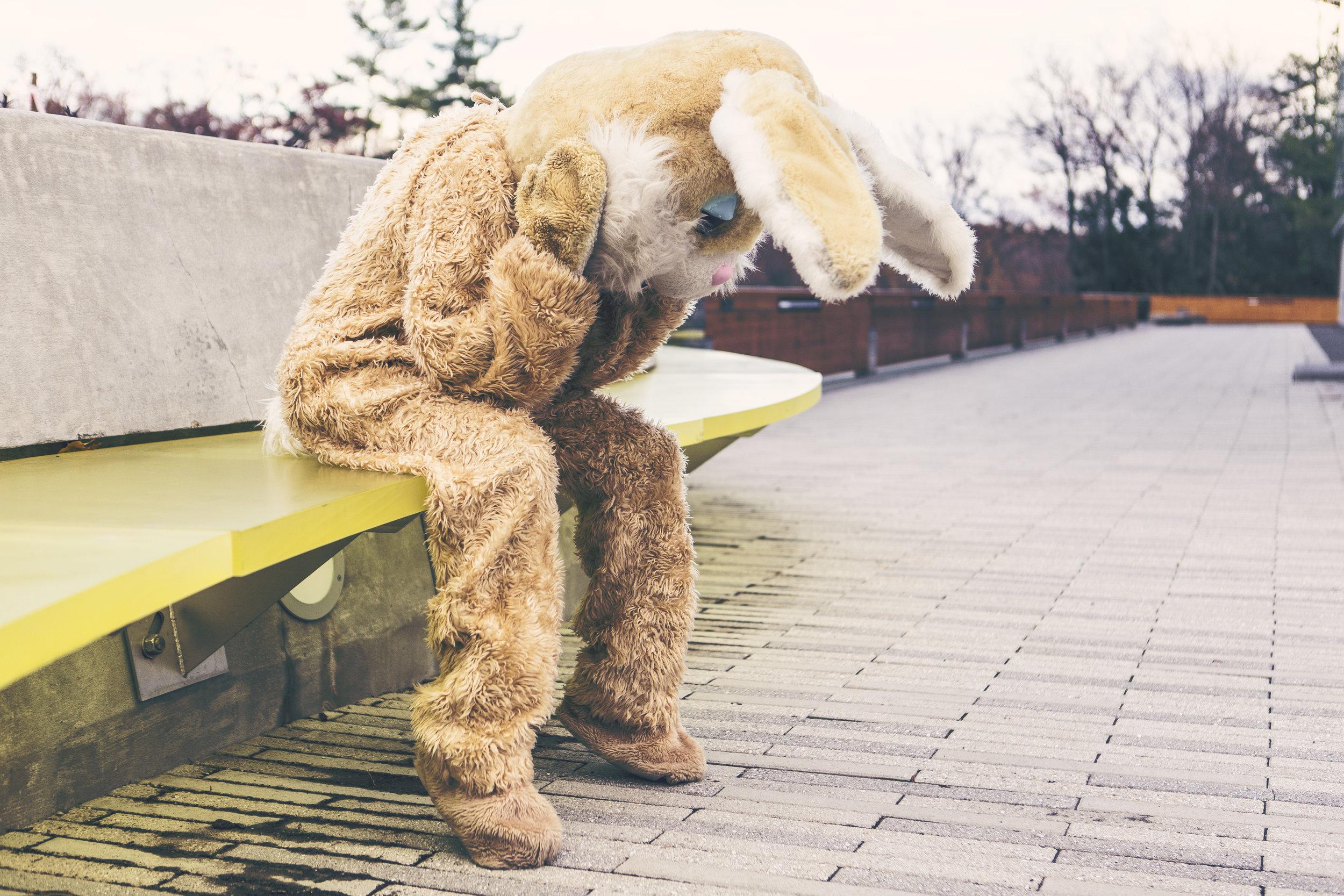 gratisography-sad-bunny.jpg