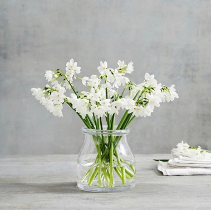 Clear 'rolled-edge' Glass Vase    12 available