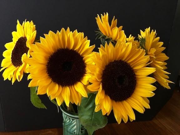 sunflower-copy-3.jpeg