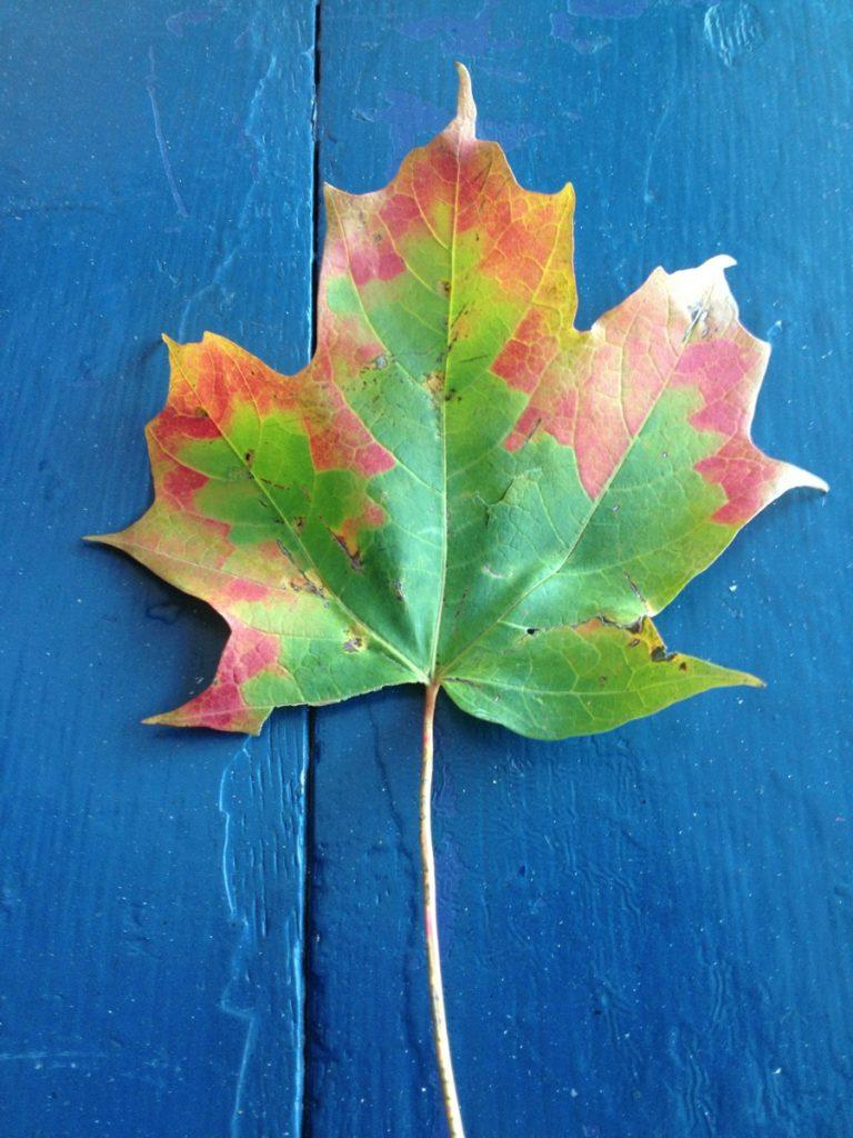 leaf-on-blue-768x1024.jpg