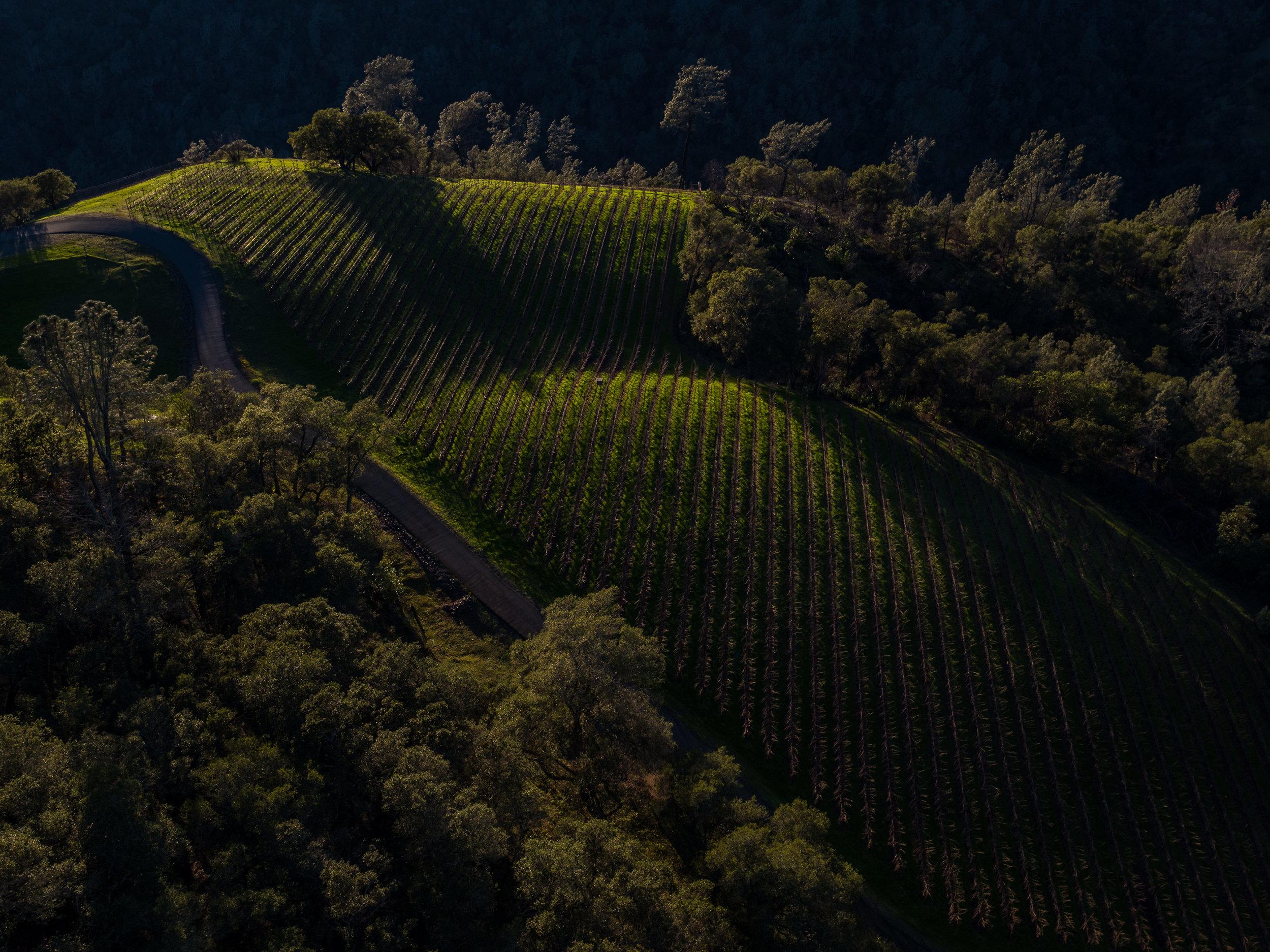 until-the-end-vineyard