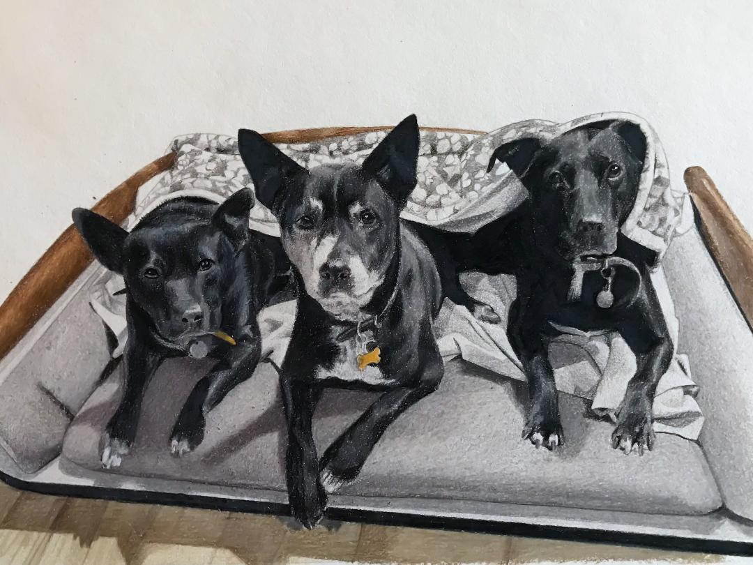 3 dogs portrait.jpg