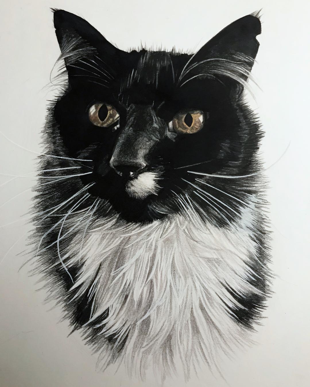 adrienne cat.jpg